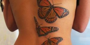 Mariposa Roja y Naranja