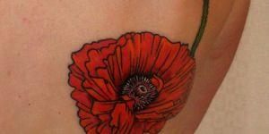 Flores Rojas y Escarabajo