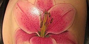 Flor Lilium