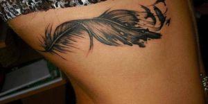 Pluma y Aves