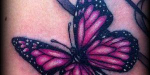 Mariposa y Cintas