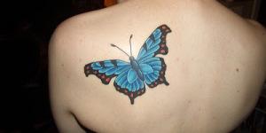 Mariposa Azul y Naranja