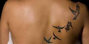 Jaula abierta y Aves volando