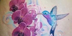 Colibrí en Flores de Orquídeas