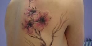 Flores de Cerezo o Sakura