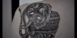 Elefante by Sergey Anuchin