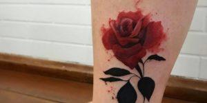Flor Rosa Roja por LCJunior