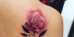 Flor Rosa realista