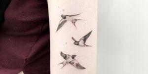 Aves por Marie, leemrink