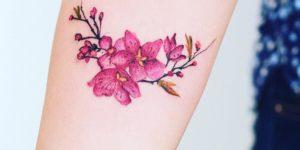 Flores de cerezo por Robson Carvalho