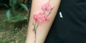 Flores Orquídeas por Giovanny Medina