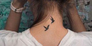 Aves pequeñas volando