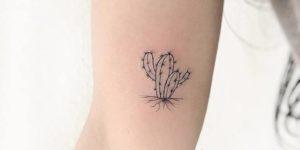 Cactus echando raíces