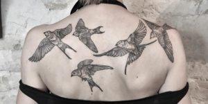 Aves golondrinas por Maret Brotkrumen